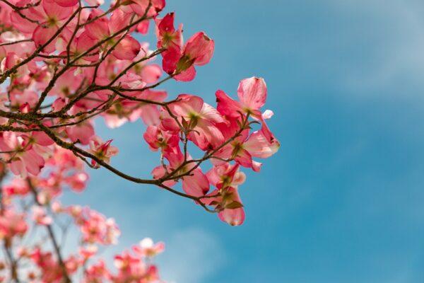 blossom-4151081_1920